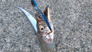太刀魚やサゴシがよく釣れるルアー激安鉄板バイブレーションはコレだ!